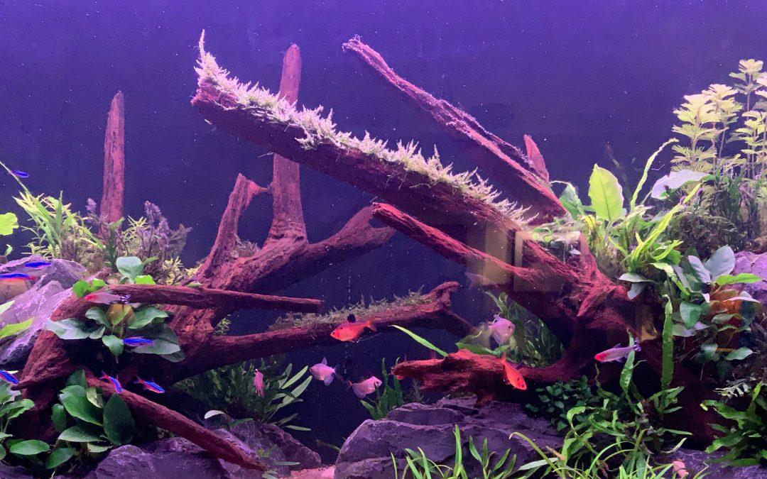 Enzmann: mein Aquarium – vom Malawi See bis zum Amazonas